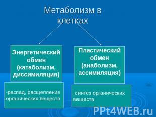 Обмен по теме презентацию