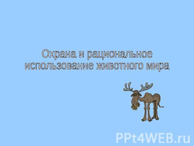 Презентация на тему животные мира
