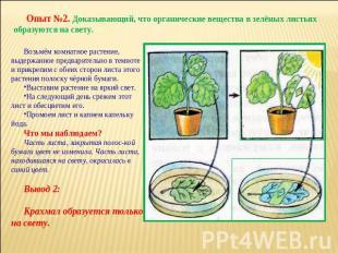 Опыт с растениями в домашних условиях