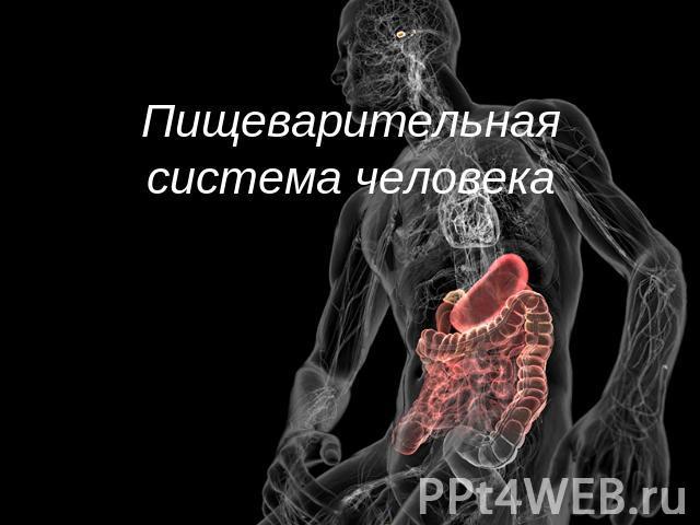 """Презентация """"Пищеварительная"""