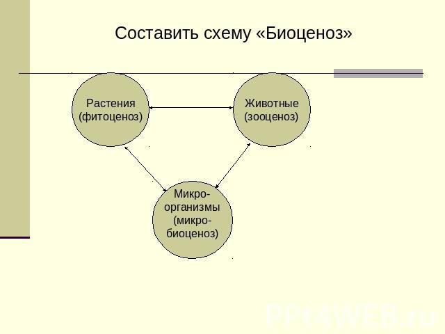 Составить схему «Биоценоз»