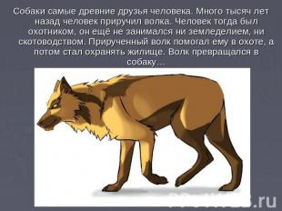 Собаки самые древние друзья человека. Много тысяч лет назад человек приручил вол