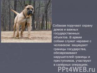 Собакам поручают охрану домов и важных государственных объектов. В армии собаки