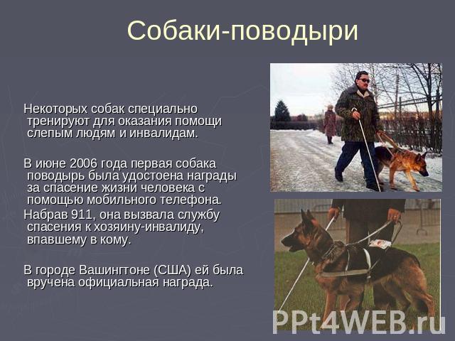 Собаки-поводыри Некоторых собак специально тренируют для оказания помощи слепым людям и инвалидам. В июне 2006 года первая собака поводырь была удостоена награды за спасение жизни человека с помощью мобильного телефона. Набрав 911, она вызвала служб…