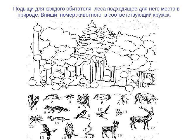 знакомства в кировской области с вдовушками