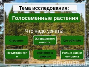 Презентация На Тему Папоротники 6 Класс
