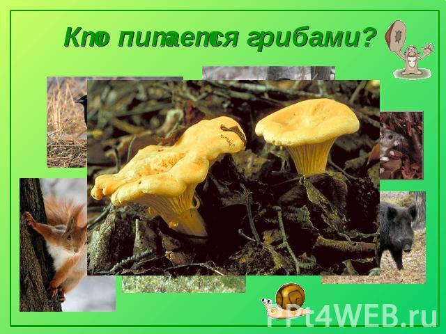 Тайны грибного царства