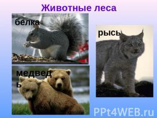 На тему природные зоны россии 2 класс