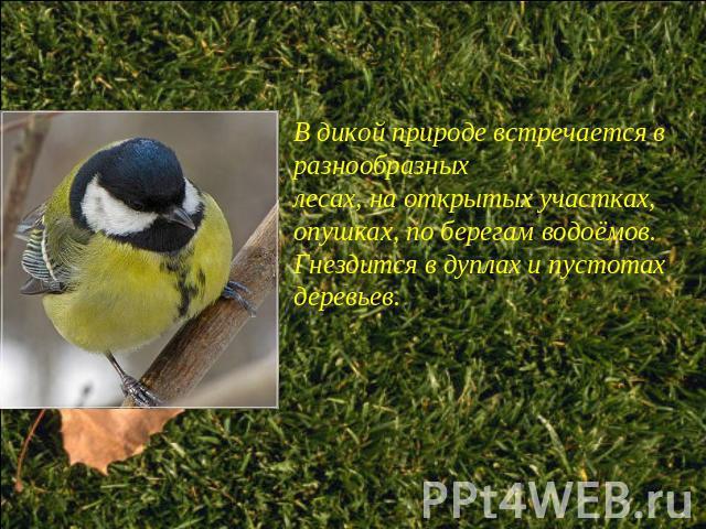 Птицы ppt