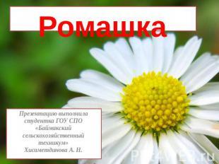 РомашкаПрезентацию выполнила студентка ГОУ СПО «Баймакский сельскохозяйственный