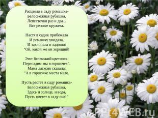 Расцвела в саду ромашка-Белоснежная рубашка,Лепесточки раз и два...Все резные кр
