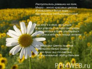 Распустились ромашки на поле,Много – много красивых цветов.И колышется белое мор