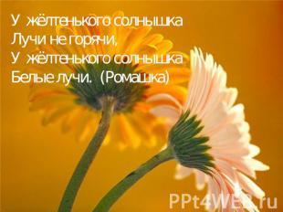 У жёлтенького солнышка Лучи не горячи, У жёлтенького солнышка Белые лучи. (Ромаш