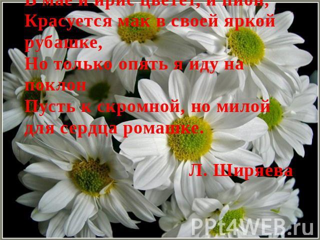 В мае и ирис цветет, и пион,Красуется мак в своей яркой рубашке,Но только опять я иду на поклонПусть к скромной, но милой для сердца ромашке.Л. Ширяева