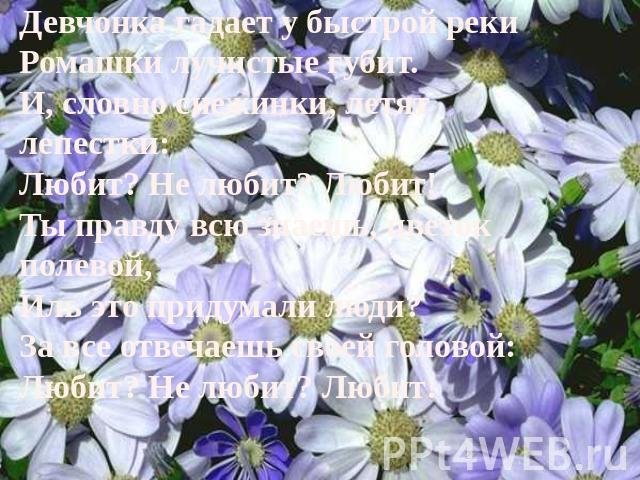 Девчонка гадает у быстрой реки Ромашки лучистые губит. И, словно снежинки, летят лепестки: Любит? Не любит? Любит! Ты правду всю знаешь, цветок полевой, Иль это придумали люди? За все отвечаешь своей головой: Любит? Не любит? Любит!