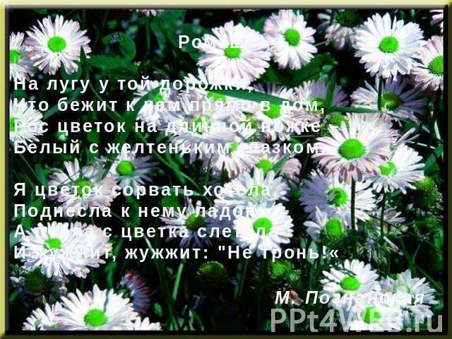 РомашкаНа лугу у той дорожки,Что бежит к нам прямо в дом,Рос цветок на длинной ножке –Белый с желтеньким глазком.Я цветок сорвать хотела,Поднесла к нему ладонь,А пчела с цветка слетелаИ жужжит, жужжит: