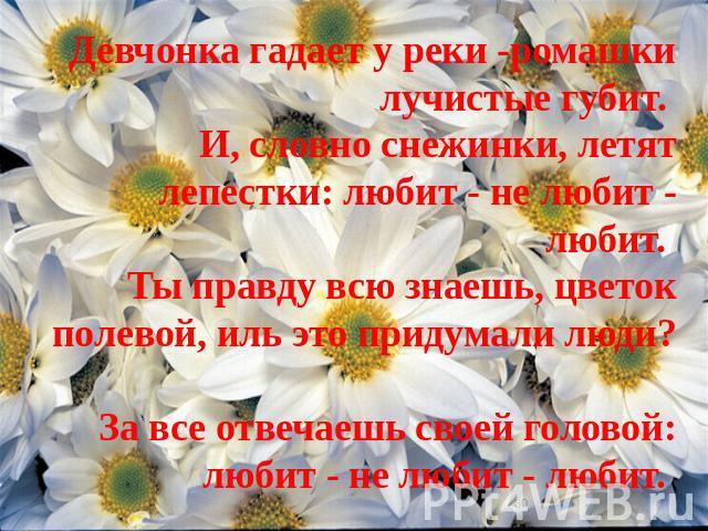 Девчонка гадает у реки -ромашки лучистые губит. И, словно снежинки, летят лепестки: любит - не любит - любит. Ты правду всю знаешь, цветок полевой, иль это придумали люди? За все отвечаешь своей головой: любит - не любит - любит.