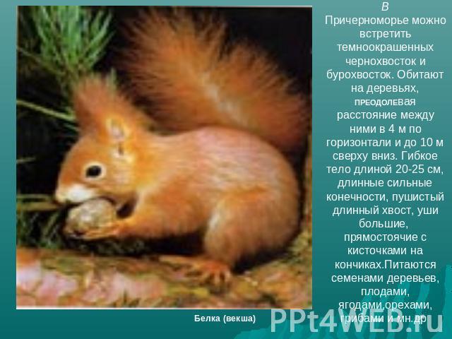 Животные в краснодаре доклад 3645