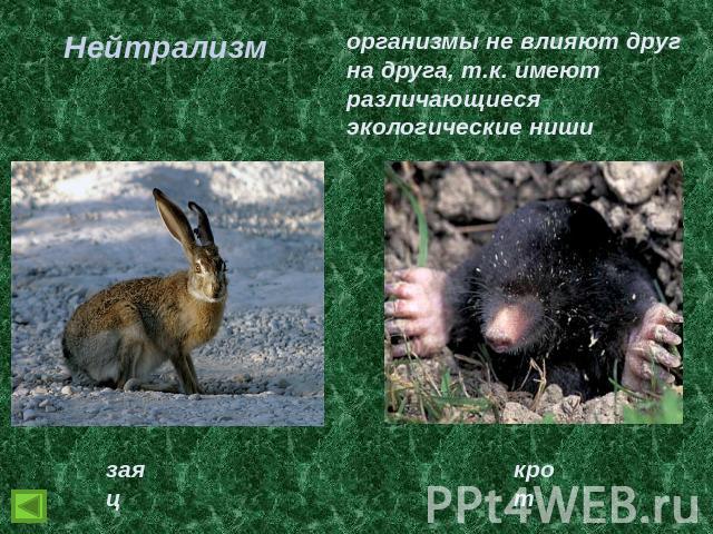 взаимосвязь животных друг с другом антистатические показатели