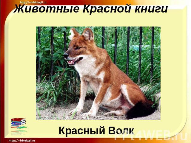 Скачать фото животных красной книги