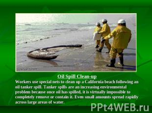 Oil Spill Clean-up Workers use special nets to clean up a California beach follo