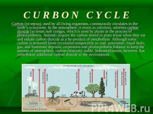 C U R B O N C Y C L E Carbon (углерод), used by all living organisms, continuous