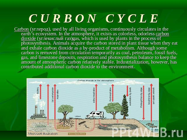 C U R B O N C Y C L E Carbon (углерод), used by all living organisms, continuously circulates in the earth's ecosystem. In the atmosphere, it exists as colorless, odorless carbon dioxide (углекислый газ)gas, which is used by plants in the process of…
