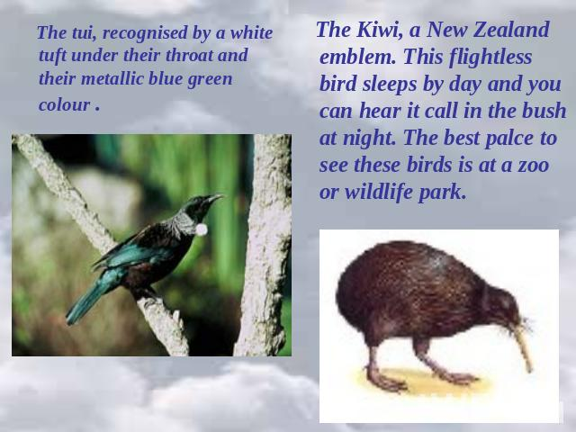 The tui, recognised by a white tuft under their throat and their metallic blue green colour . The Kiwi, a New Zealand emblem. This flightless bird sleeps by day and you can hear it call in the bush at night. The best palce to see these birds is at a…