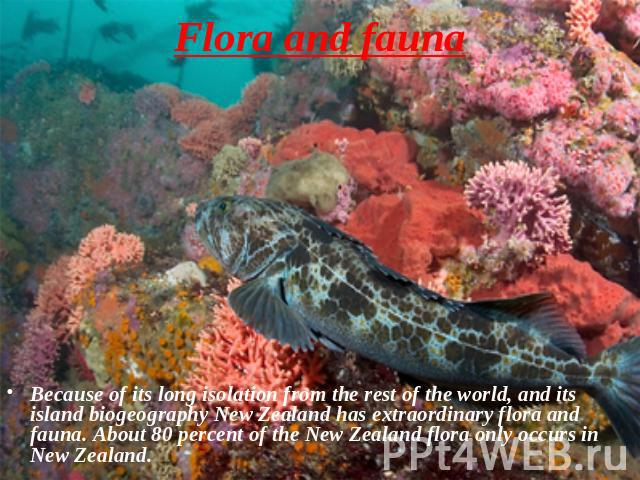 Flora and fauna Because of its long isolation from the rest of the world, and its island biogeography New Zealand has extraordinary flora and fauna. About 80 percent of the New Zealand flora only occurs in New Zealand.