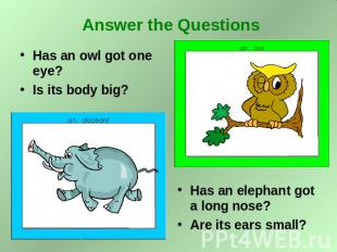 Answer the Questions Has an owl got one eye? Is its body big? Has an elephant go