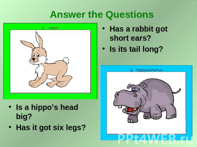 Answer the Questions Is a hippo's head big? Has it got six legs? Has a rabbit got short ears? Is its tail long?