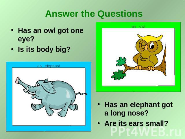 Answer the Questions Has an owl got one eye? Is its body big? Has an elephant got a long nose? Are its ears small?