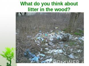 What do you think about litter in the wood?