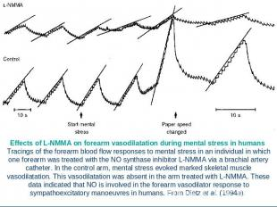 Effects of L-NMMA on forearm vasodilatation during mental stress in humans Traci