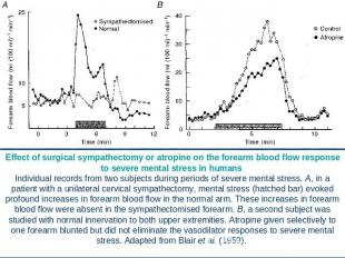 Effect of surgical sympathectomy or atropine on the forearm blood flow response