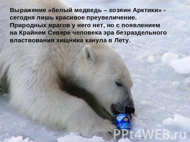 жив ли белый медведь объявлений продаже аренде