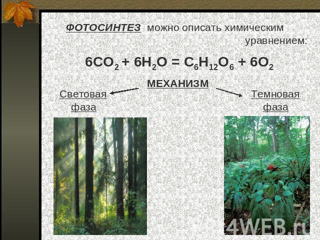 химическая формула фотосинтеза собой пюре