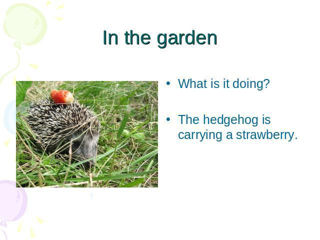 In the garden What is it doing?The hedgehog is carrying a strawberry.