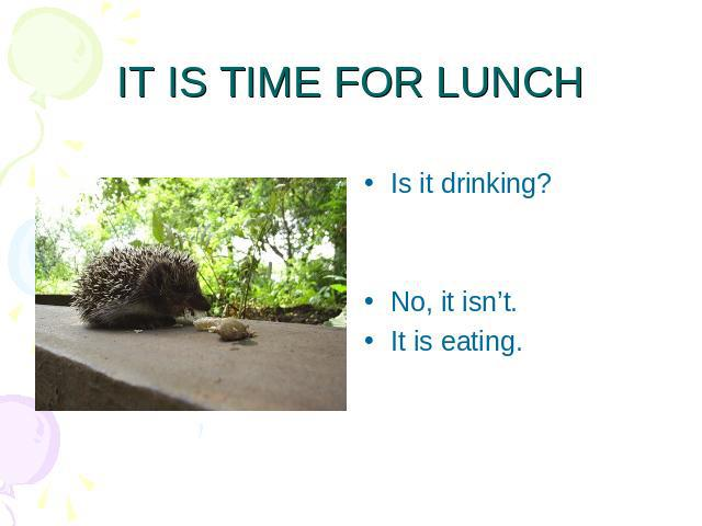 IT IS TIME FOR LUNCH Is it drinking?No, it isn't.It is eating.
