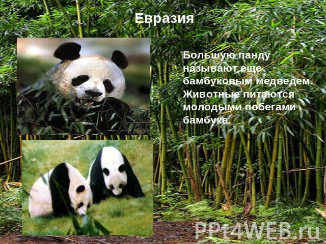 это редкие животные евразии краткий разказ Санкт-Петербург, просп свою