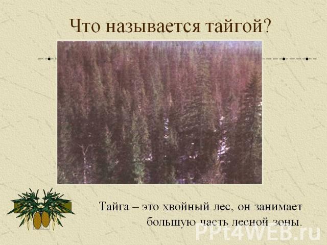 леса россии занимают большую часть ипб банк официальный сайт в санкт-петербурге