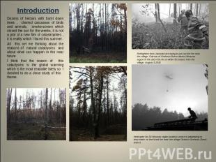 Introduction Dozens of hectars with burnt down trees , charred carcasses of bird