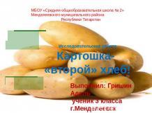 Русскому презентация исследовательская работа картофель второй хлеб