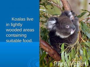 Koalas live in lightly wooded areas containing suitable food.