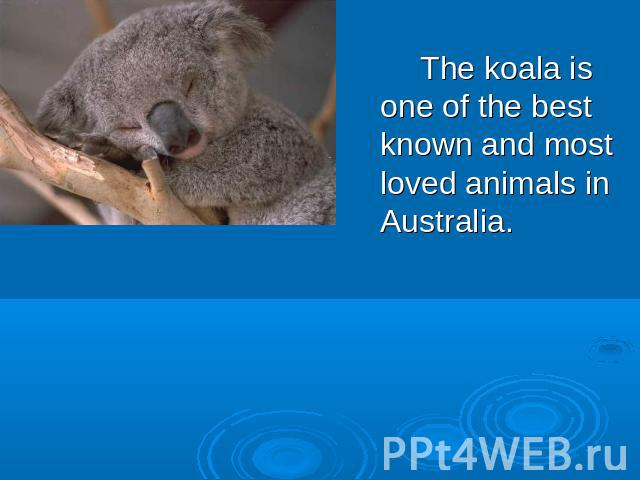 The koala is one of the best known and most loved animals in Australia