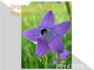 Organisms that live together