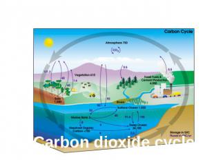The balance of nature Carbon dioxide cycle