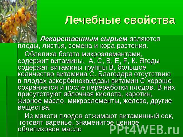 """Презентация """"Облепиха - удивительное растение"""" - скачать презентации по Экологии"""