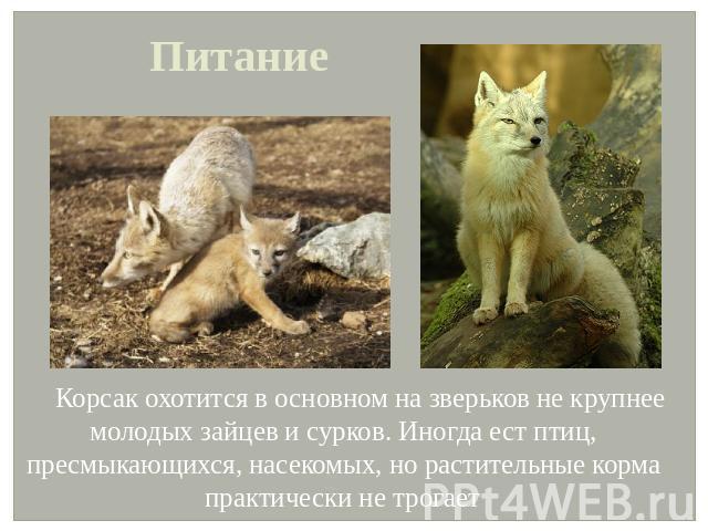 Реферат на тему корсак на українській