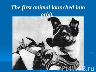 The first animal launched into orbit.
